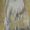 white-horse-40-50cm-340lv